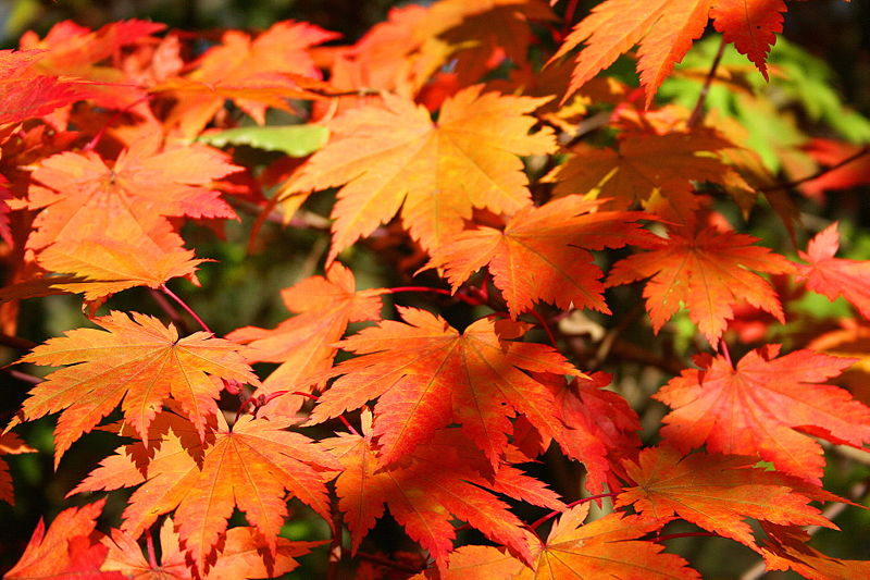 Fall Plumbing Maintenance Tips and- Preparing For A Pittsburgh Winter