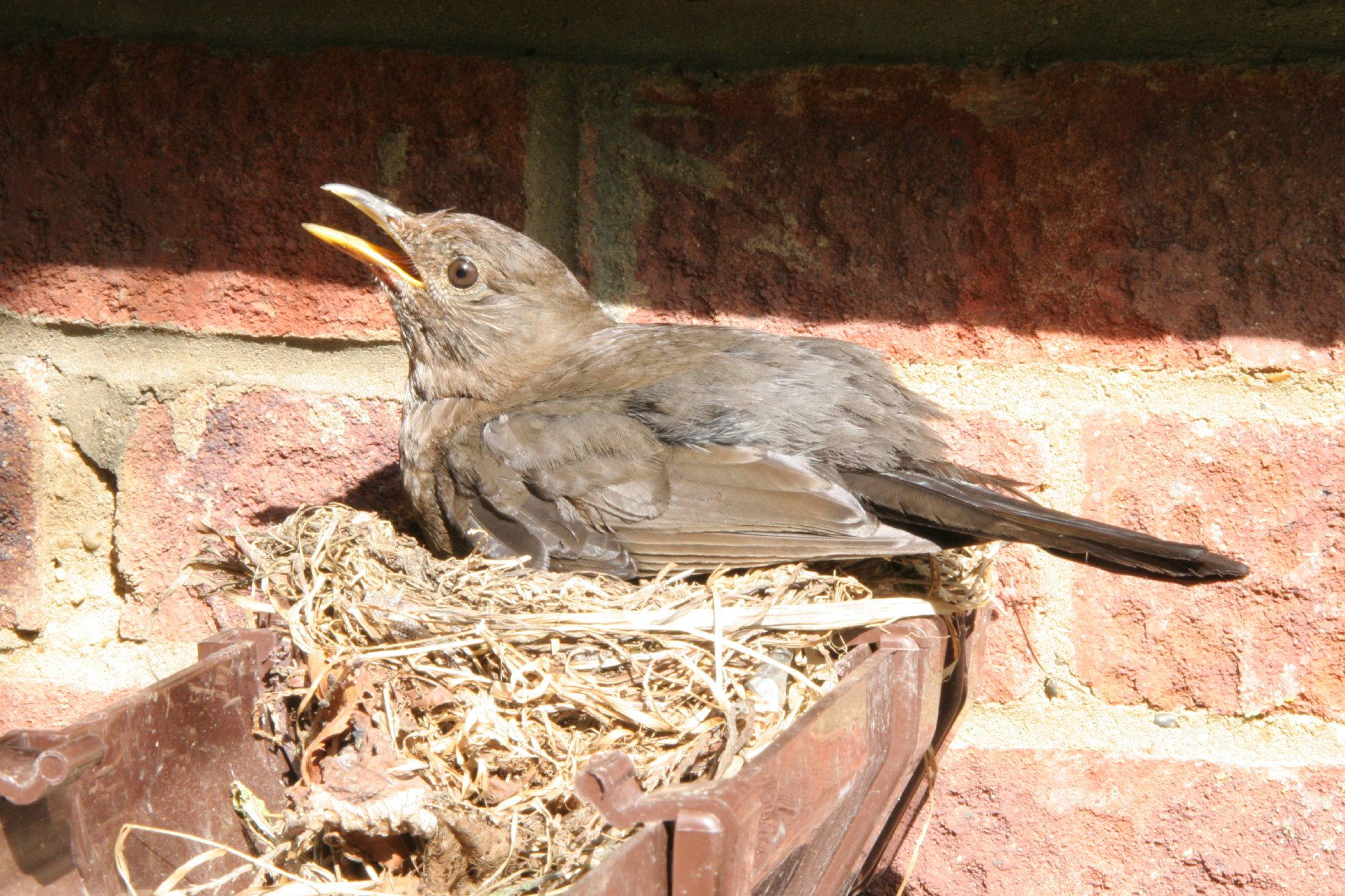 Prevent Pesky Birds From Nesting In Your Gutters Terry
