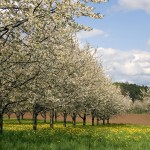 More Springtime Tips: Solving Common Spring Plumbing Problems