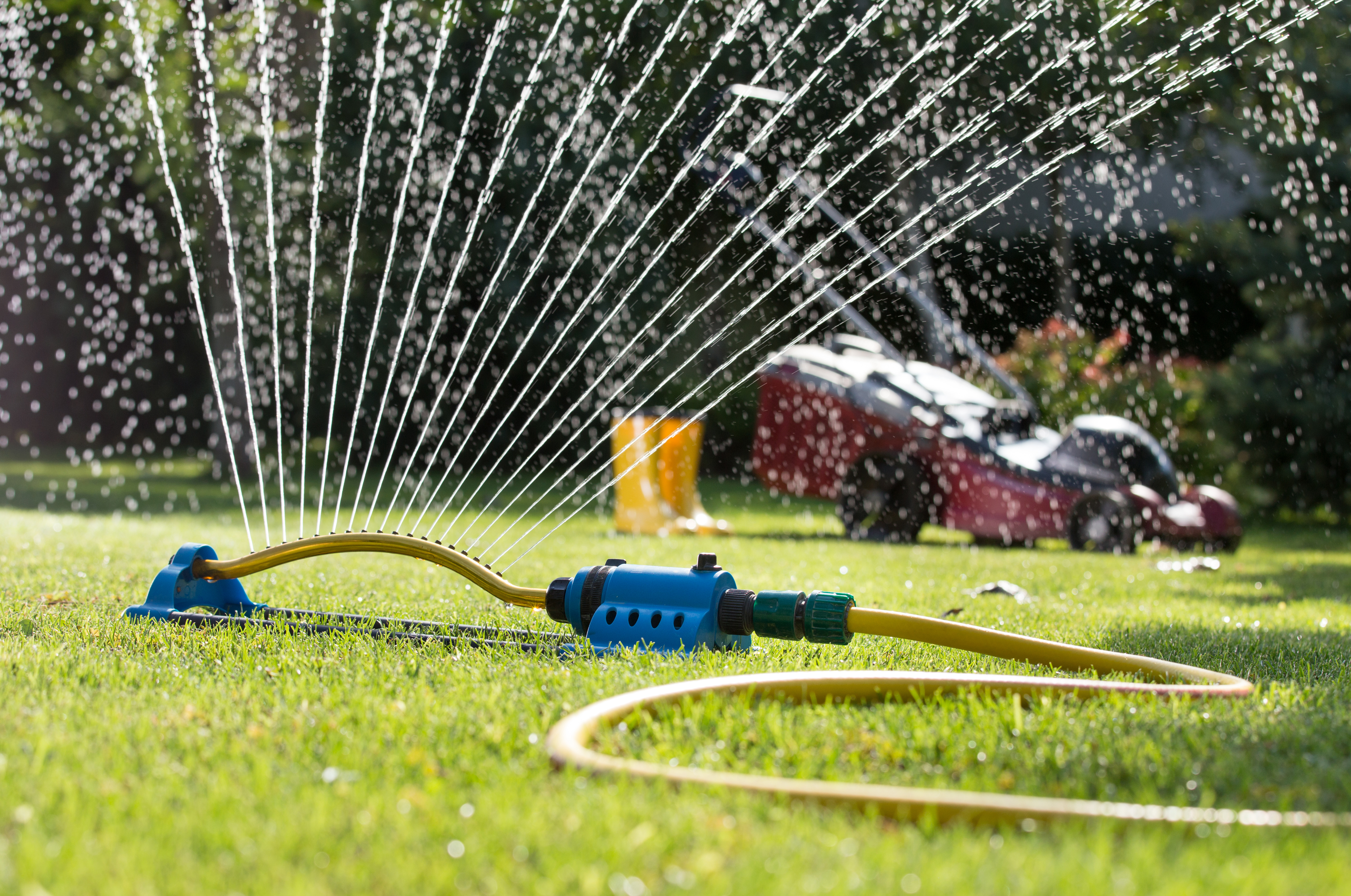 How and when to Water Your Lawn | Terry's Plumbing