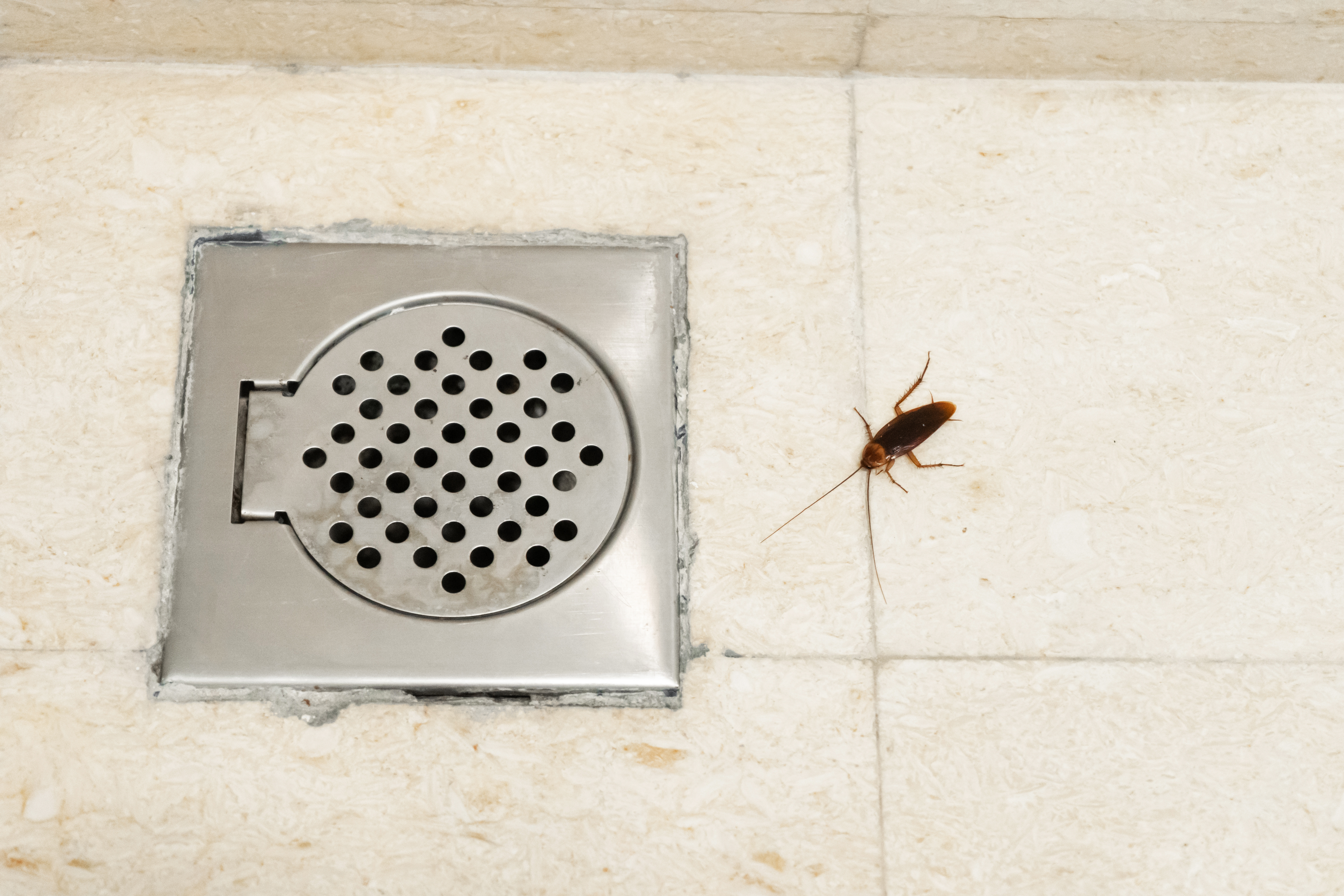Bugs that live in your pipes | Pittsburgh | Terry's Plumbing