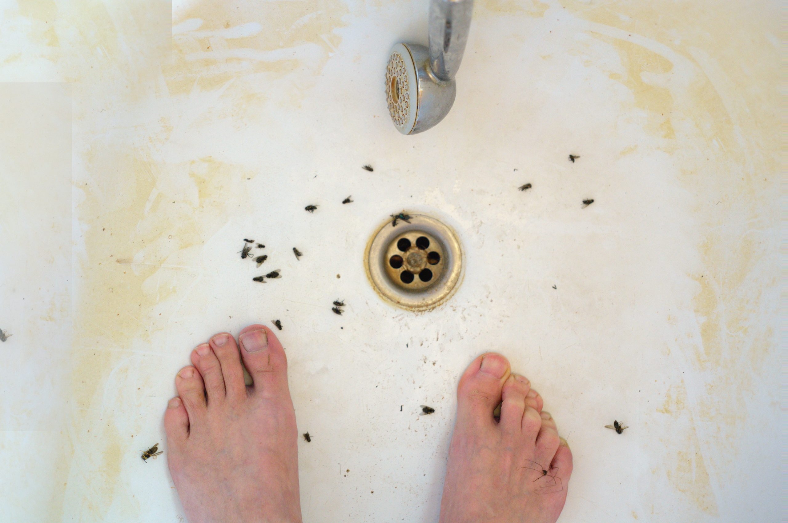 Cleaning 101: Getting Rid of Drain Flies   Pittsburgh   Terry's Plumbing